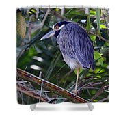 Yellow Crowned Night-heron Shower Curtain