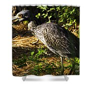 Yellow-crowned Night Heron Eating A Fiddler Crab Dinner Shower Curtain