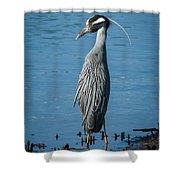 Yellow-crowned Night-heron Shower Curtain