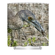 Yellow-crowned Night Heron With Crab Shower Curtain