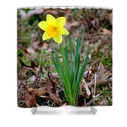 Yellow Daffodil At Lee Gardens Shower Curtain