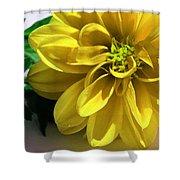 Yellow Dahlia Closeup Shower Curtain