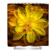 Yellow Dahlia Under Water Shower Curtain