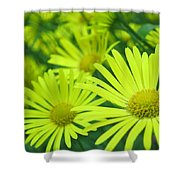 Yellow Daisies Close-up Shower Curtain