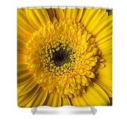 Yellow Daisy Close Up Shower Curtain