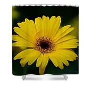 Yellow Daisy Shower Curtain