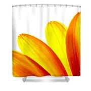 Yellow Daisy Petals Macro Shower Curtain