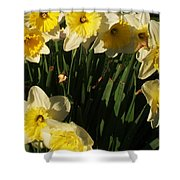 Yellow Day Lilies Shower Curtain
