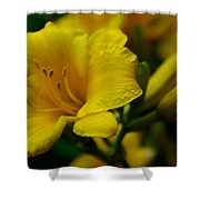 One Day Lily  Shower Curtain