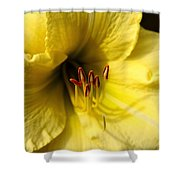 Grace Yellow Day Lily Art Shower Curtain