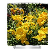 Yellow Daylilies Shower Curtain