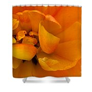 Yellow Double Tulip Shower Curtain
