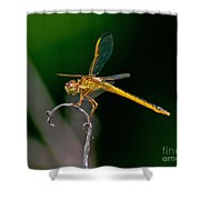 Yellow Dragonfly Shower Curtain
