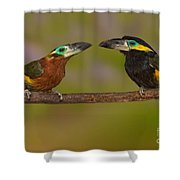 Yellow-eared Toucanet Pair Shower Curtain