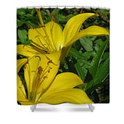 Yellow Easter Lily Shower Curtain