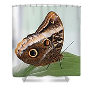 Yellow-edged Giant Owl Butterfly #3 Shower Curtain