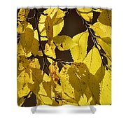 Yellow Elm Shower Curtain