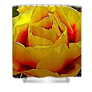 Yellow Engelmann Prickly Pear On Chihuahuan Desert Trail In Big Bend National Park-texas   Shower Curtain
