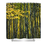 Yellow Fall Birch Leaves Against An Shower Curtain