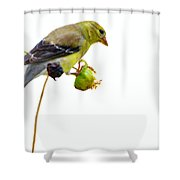 Yellow Finch Shower Curtain