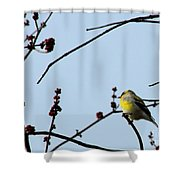 Yellow Finch In Spring Shower Curtain