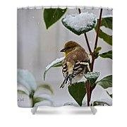 Goldfinch On Branch Shower Curtain