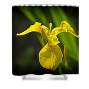 Yellow Flag Flower Outdoors Shower Curtain