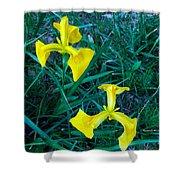 Yellow Flag Iris Shower Curtain