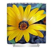 Yellow Flower Helianthus Shower Curtain