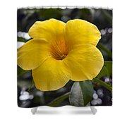 Yellow Flower Of Golden Trumpet Vine Shower Curtain