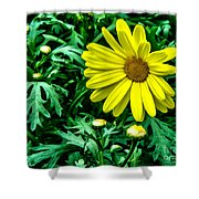Yellow Flower Of Spring Shower Curtain