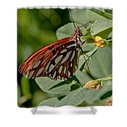 Yellow Flower With Gulf Fritillary Butterfly Shower Curtain