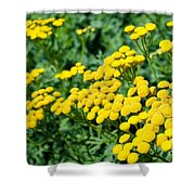 Yellow Flowers 3 Shower Curtain