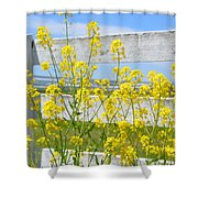 Yellow Flowers And A White Fence Shower Curtain