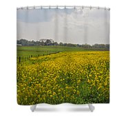 Yellow Flowers In A Field Shower Curtain