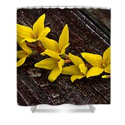 Yellow Forsythia Shower Curtain
