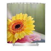 Yellow Gerber Daisy Shower Curtain