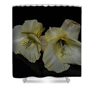 Yellow Gladiolus Shower Curtain