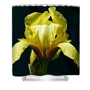 Yellow Glory Shower Curtain