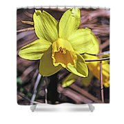 Yellow Glory Shower Curtain
