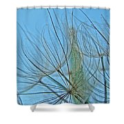 Yellow Goat's Beard Wildflower Seed Head - Tragopogon Dubius Shower Curtain