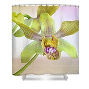 Yellow-green Orchid Shower Curtain