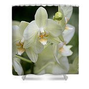 Yellow-green Phalaenopsis 8837 Shower Curtain