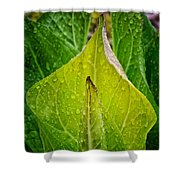 Yellow Green Skunk Cabbage Square Shower Curtain