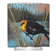 Yellow Headed Black Bird Shower Curtain
