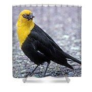 4m09157-02-yellow Headed Blackbird Shower Curtain