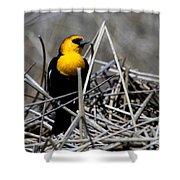 Yellow-headed Blackbird Shower Curtain