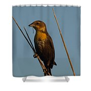 Yellow-headed Blackbird With Dragonfly Shower Curtain