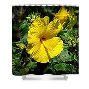 Yellow Hibiscus Hawaii State Flower Shower Curtain
