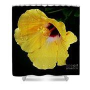 Yellow Hibiscus In The Rain Shower Curtain